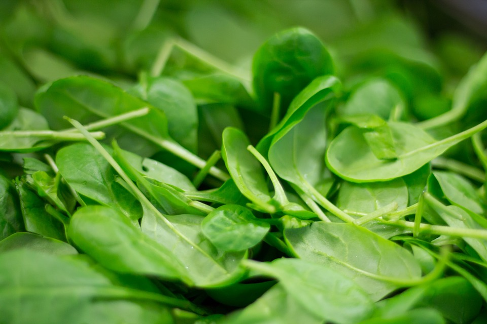 fresh and healthy spinach